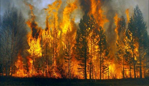 В Хорватии зажженная на могиле лампада вызвала трехдневный пожар