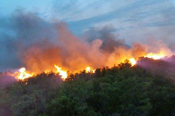 Заблудившийся в лесу польский турист спровоцировал крупный пожар в Черногории