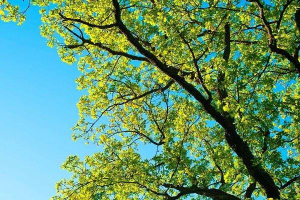 На юге Москвы нашли застрявшее в кроне дерева тело мужчины
