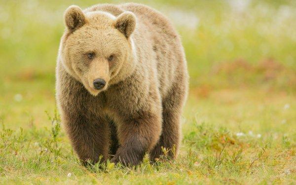 На Ямале нашли растерзанное медведем тело мужчины