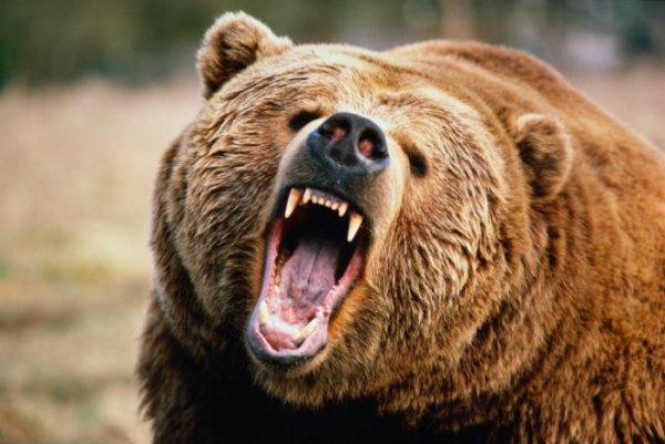 На Таймыре дикий медведь насмерть задрал шестилетнего ребенка