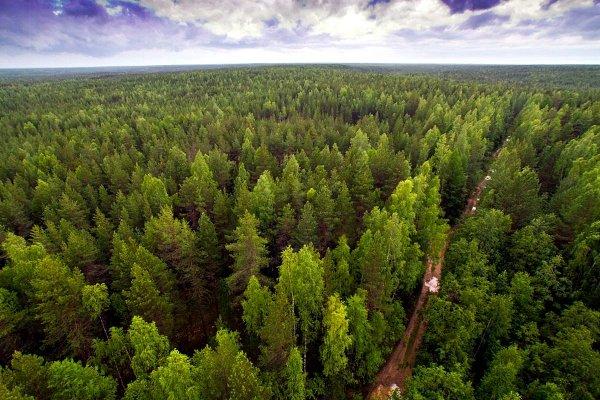 В лесах Коми спасатели разыскивают охотника