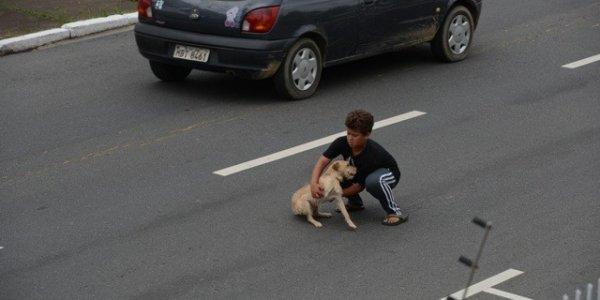 Девушка осознанно переехала на машине пса на глазах у его хозяина во Владивостоке