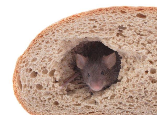 В батоне, купленном волгоградцем, оказалась живая мышь
