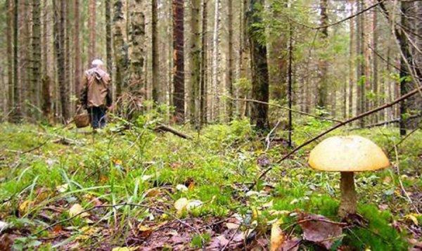 Под Нижним Новгородом идут поиски пропавшего в лесу 4-летнего ребенка