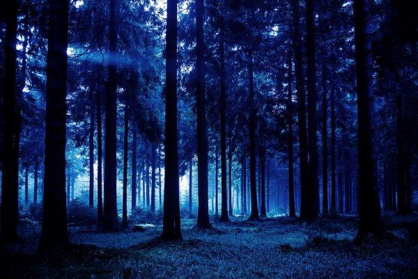 Пропавшего вчера в лесу Нижегородской области 4-летнего мальчика нашли живым
