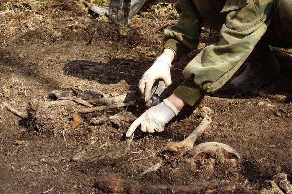 В Ярцево во время строительства стадиона обнаружили останки десятков людей