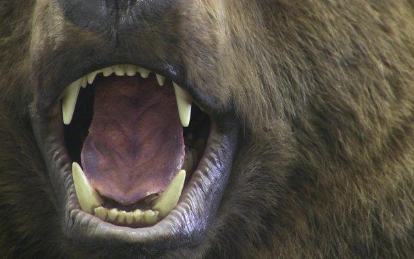 Нападение медведя на рынок на Камчатке попало на видео