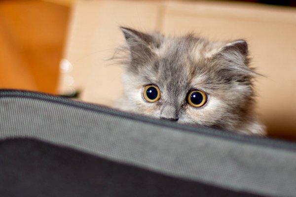 На Украине пользователи сети затравили хозяйку кота с татуировкой
