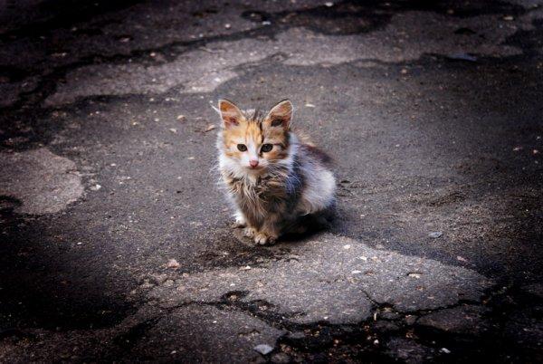 Белорусского правоохранителя уволили за то, что он пнул котенка