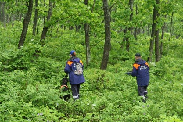 В Приморском крае разыскивают мужчину пропавшего в лесу