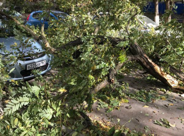 В Ростове из-за сильного ветра дерево упало на припаркованный автомобиль