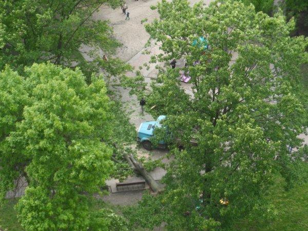 Вихрь повалил деревья и крыши в Волгограде