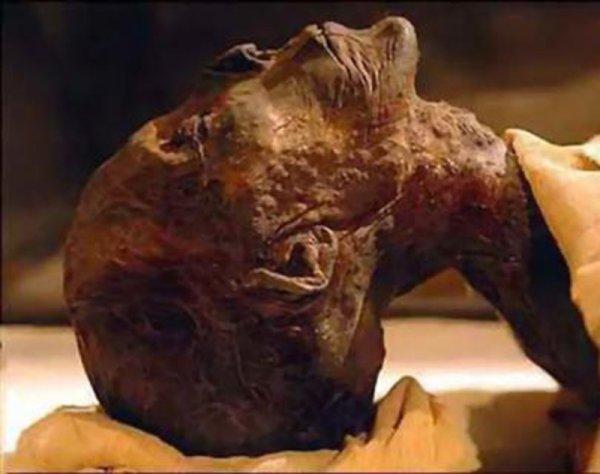 В одной из квартир Москвы нашли мумию пенсионера