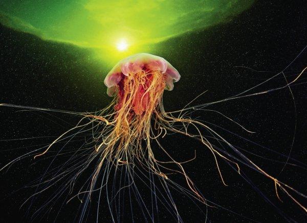 Сцифоидных медуз вынесло на берег приморской Находки
