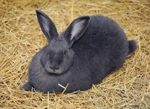 СМИ: Неизвестное существо убивает кролей в Украине