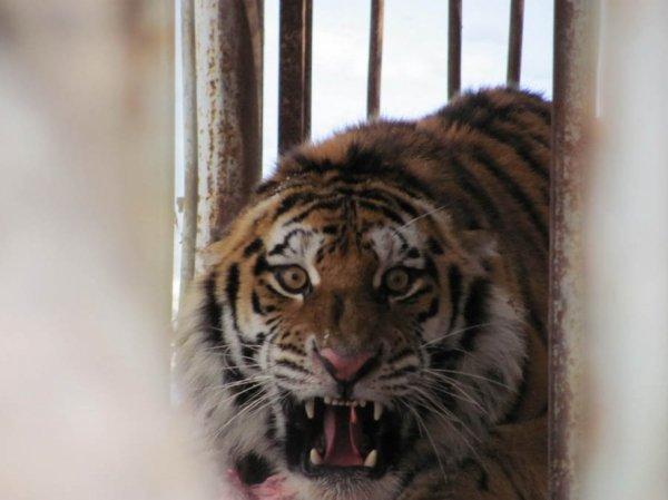 В Приморье установили людей, напавших на животных в зоопарке