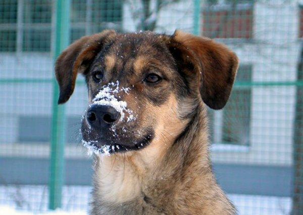 В Черногории дворовой пес спас женщину от грабителя