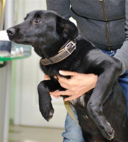 В Петербурге женщина бросила собаку, привязав ее возле ветеринарной клиники