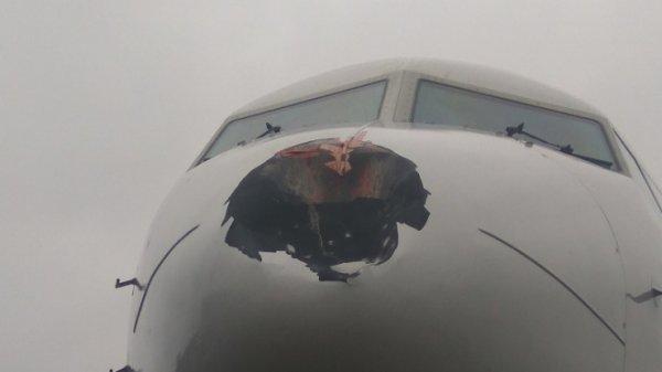 В Петербурге самолет при посадке столкнулся с птицей