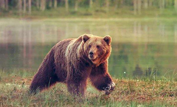 Первым обломки ракеты «Союз-2.1б» нашёл медведь