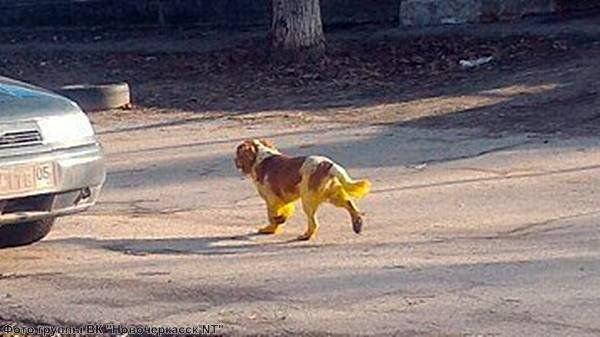 Хулиганы из Ростовской области покрасили собаку в жёлтый цвет