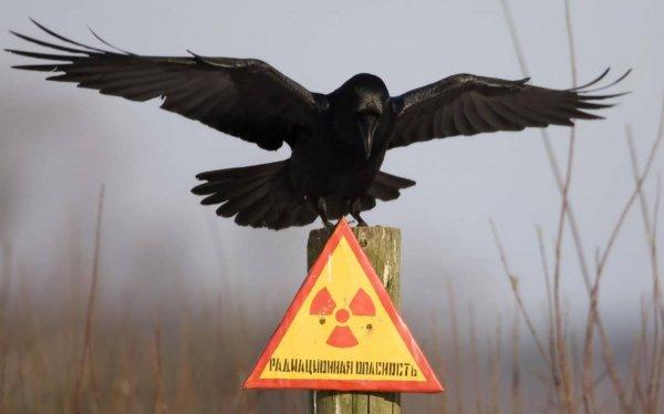 Из-за радиации в Кемеровской области закрыли несколько классов в школе