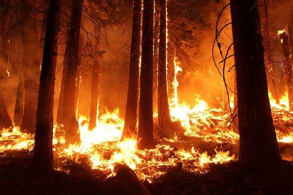 Опра Уинфри может лишиться дома из-за пожара в Калифорнии