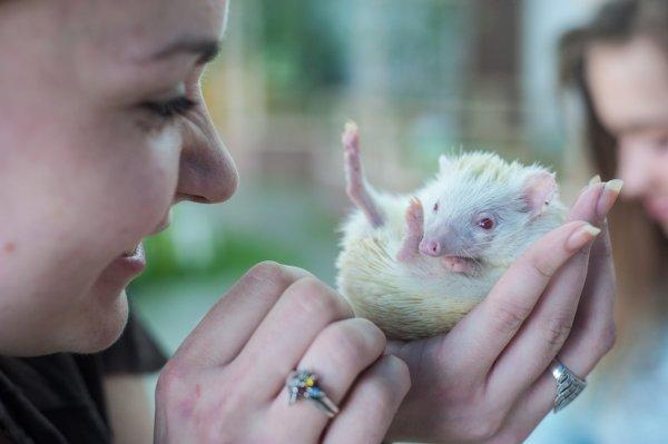 Суп с котом: В Казахстанском зоопарке сварились несколько десятков животных
