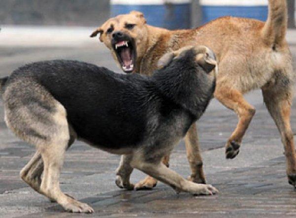 Как в ужасах: В Подмосковье собаки отгрызли голову пенсионерке