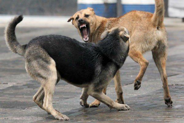С администрации омского парка требуют 300 тысяч рублей за укус собаки