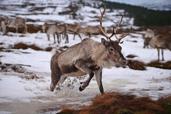 В Уфе спасли оленя, провалившегося под лёд