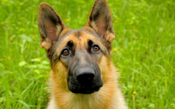Под Самарой на свалке обнаружили искалеченную собаку поводыря
