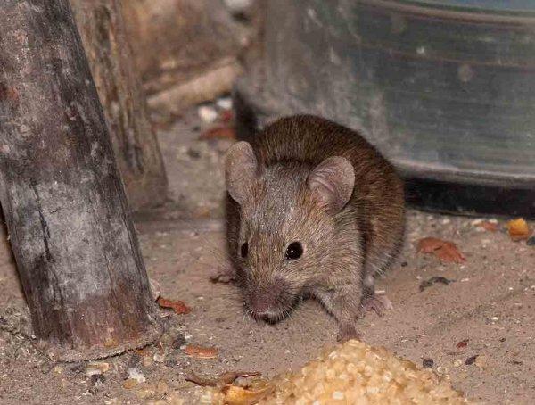 Подростка чуть не съели крысы пока его отец развлекался с любовницей