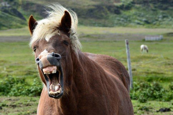 В Ярославле агрессивный пони атаковал женщину