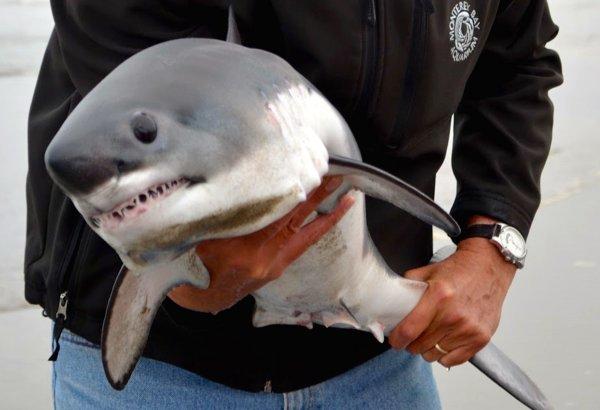 Мужчина чуть не остался без руки при попытке спасти акулу