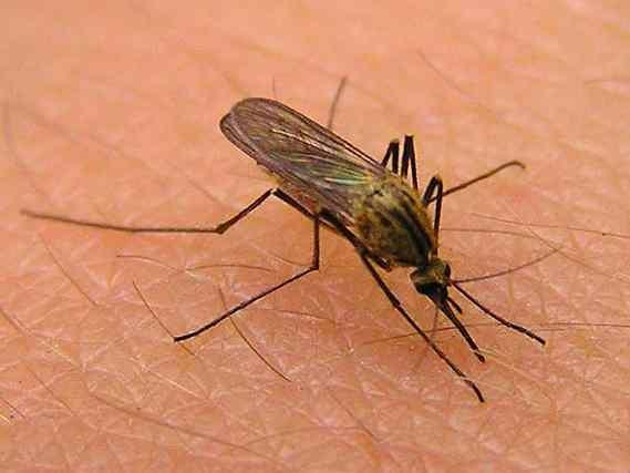 В Ступене в Подмосковье на жителей напали зимние комары