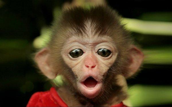 В Британии в зоопарке умерло 13 обезьян из-за пожара