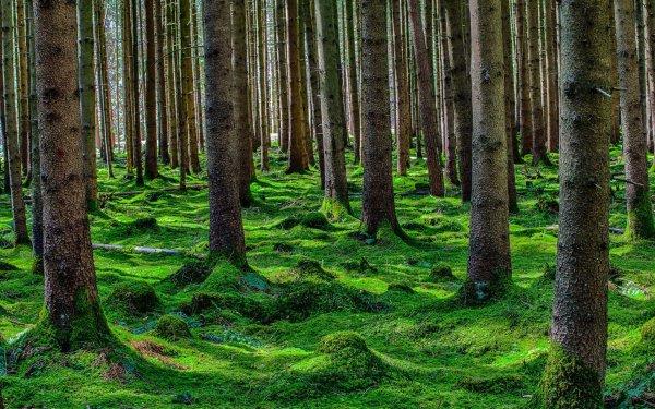 В лесу в Краснодарском крае неизвестные ранили одного и убили двух отдыхающих