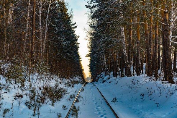 В Свердловской области дети ушли в лес и не вернулись