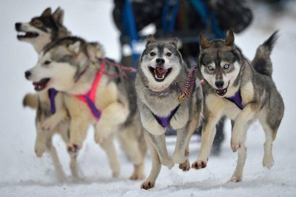 Жестокое избиение собаки в хаски-парки в Сочи сняли на видео