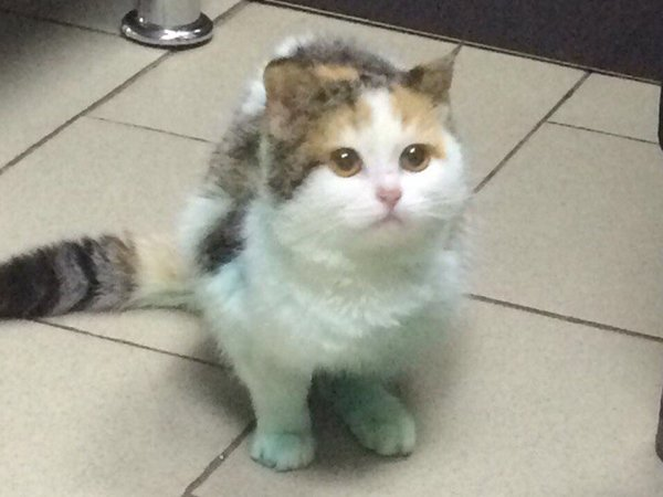 В Ростове кошка получила электрический разряд в трансформаторной будке