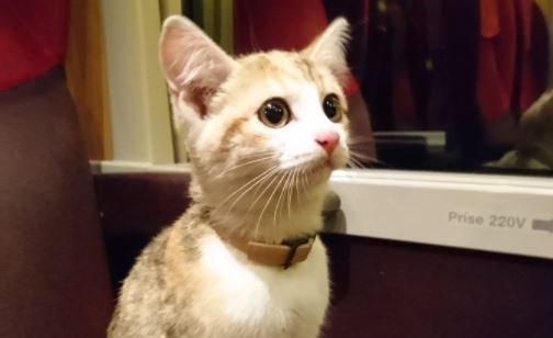 Во Франции настырный котенок самостоятельно вернулся к хозяйке на поезде