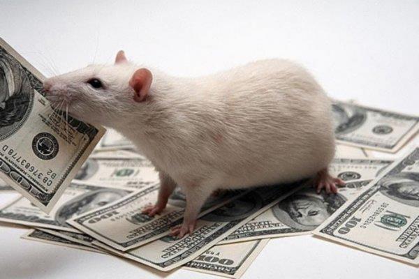 В Казахстане мыши сгрызли деньги в банкомате