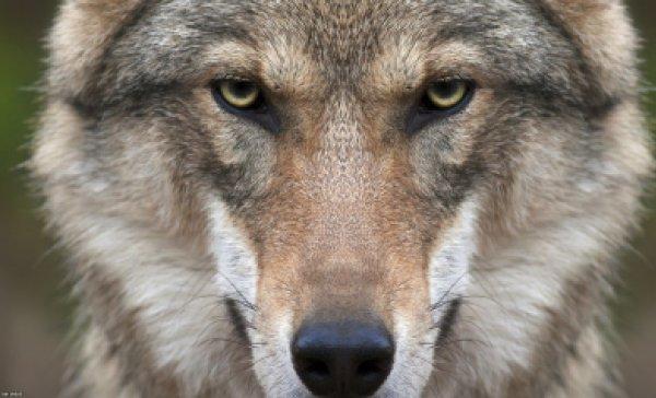 В Астраханской области убили монстра, пожиравшего собак