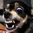 СК проверяет данные о нападении бродячих собак на школьников в Казани