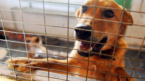 В Москве рабочие из приюта для животных украли 20 мешков корма