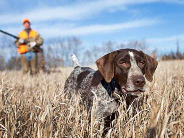 Собака застрелила охотника из ружья под Саратовом