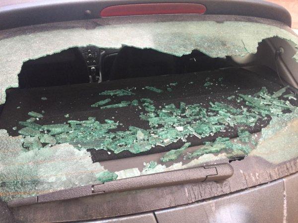 Птицы против людей: В Астрахани вороны сбрасывают камни на стекла машин