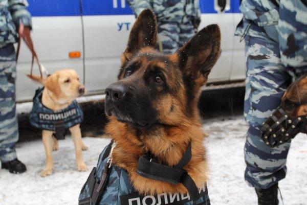 Сведения о «минировании» Курского и Киевского вокзалов в Москве не подтвердились